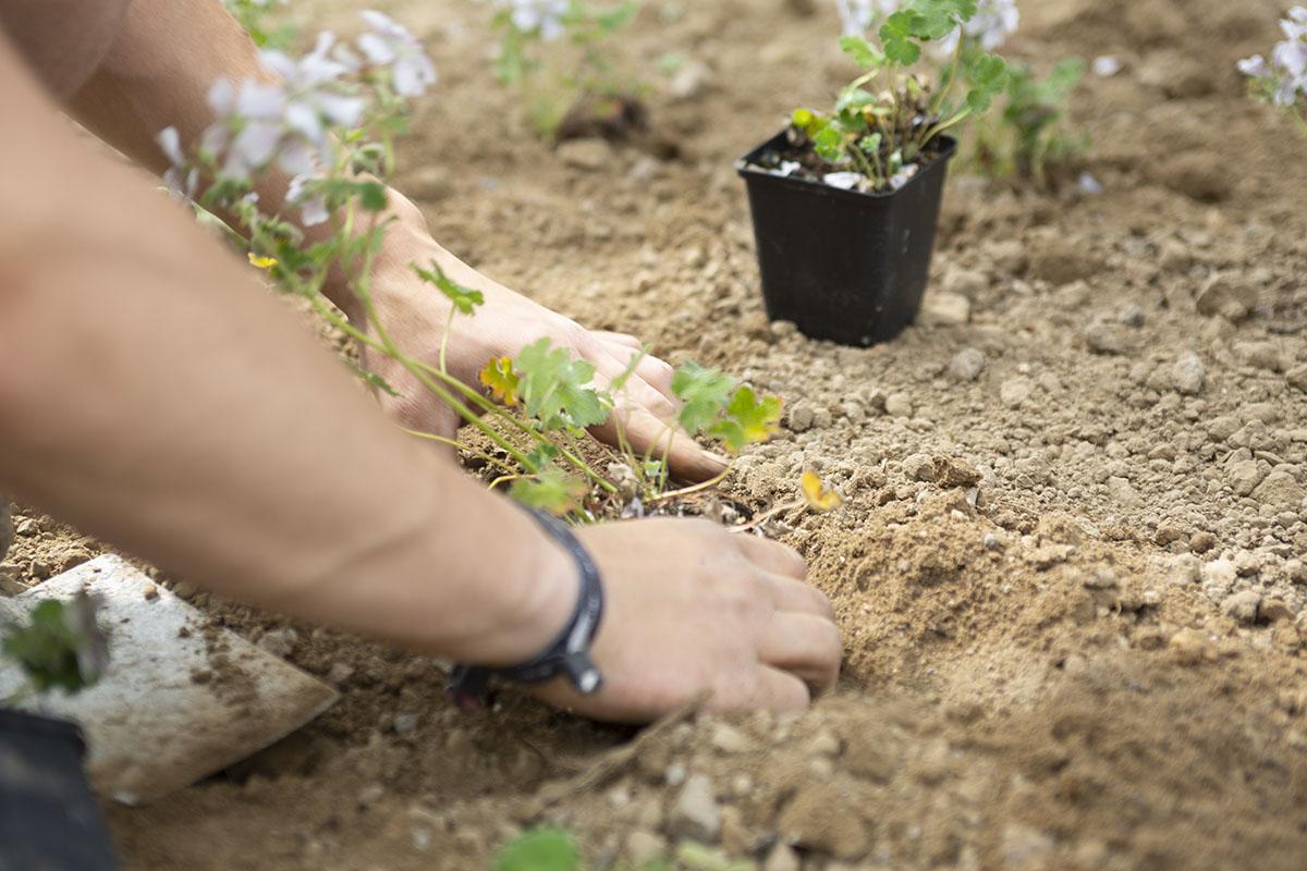ZGALA - Bepflanzung